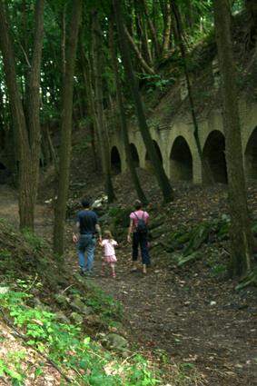 Schluchtwald im Graben des Forts