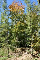 Naturführung2